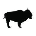 Buffalo Silhouette Stencil