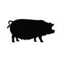 Fat Pig Silhouette Stencil