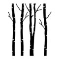Birch Tree Stencil
