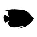 Angel Fish Silhouette Stencil