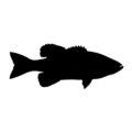Bass Fish Silhouette Stencil
