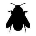 Bee Silhouette Stencil