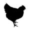 Chicken Silhouette Stencil