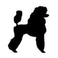 Poodle Silhouette Stencil