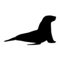 Sea Lion Silhouette Stencil