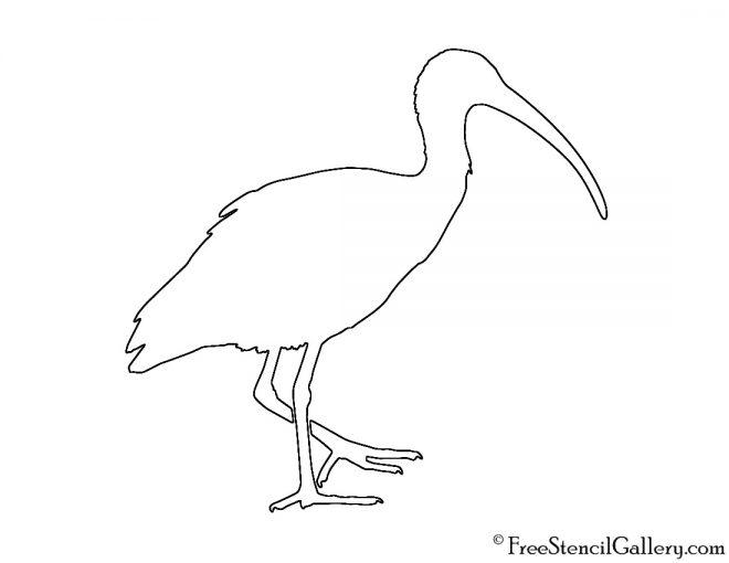 Ibis Silhouette Stencil