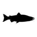 Salmon Silhouette Stencil